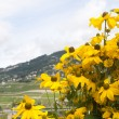 Постер, плакат: Bright Yellow Coneflowers in Switzerland