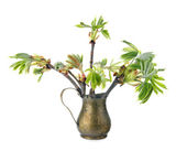 Young branch of horse chestnut tree in copper jug, isolated on white — Stock Photo