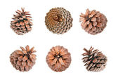 Fir cone isolated on white background — Stock Photo