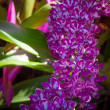 Stock Photo: Orchids