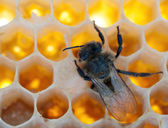 A bee fills — Stock Photo