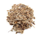 Seed of dill — Stock Photo