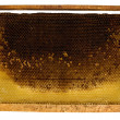 Stock Photo: Bee honeycombs