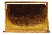 Favos de mel de abelha — Foto Stock