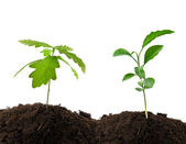 Two plants — Stock Photo