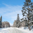 Road is in winter forest — Stock Photo