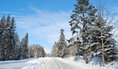 Road is in winter forest — Foto Stock