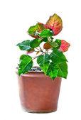 Decorative flower — Stock Photo