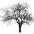 Stock Photo: Large bare tree