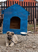 Dog in dog house — Stock Photo