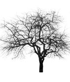 Large bare tree — Stock Photo