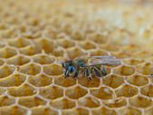 Working bee — Stockfoto