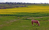 Horse and field — Stock Photo