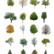 Trees isolated — Stock Photo #51265967