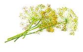 Kwiat kopru — Zdjęcie stockowe