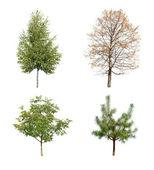 Trees — Zdjęcie stockowe