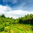 Bali — Stock Photo