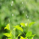 Rain — Stock Photo #12596531