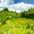 Bali — Stock Photo #12596601