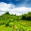 Bali — Stock Photo #12637463