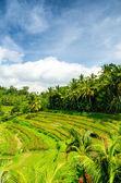 Bali — Zdjęcie stockowe