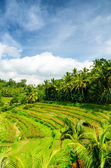 Bali — Stockfoto