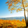Autumn — Stock Photo #13473570