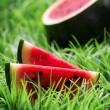 Ripe watermelon on green grass — Lizenzfreies Foto
