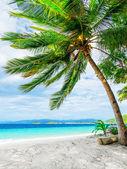 Green tree on white sand beach — Stock Photo