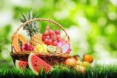 Cesta de frutas tropicales en la hierba verde. — Foto de Stock