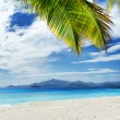 Green tree on white sand beach — Stock Photo #18600387