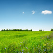 Green field under the blue sky. Summer landscape. — Stock Photo #19805579
