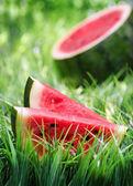 Reife wassermelone auf grünem gras. — Stockfoto
