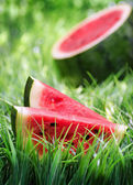 Ripe watermelon on green grass — Stok fotoğraf