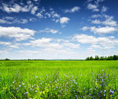 Green field under the blue sky. Summer landscape. — Stok fotoğraf
