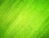 Texture of green leaf. Nature background. — Foto de Stock
