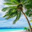 Green tree on white sand beach — Stock Photo #19861357