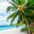 Stock Photo: Green tree on white sand beach