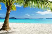 Zielone drzewo na białej, piaszczystej plaży — Zdjęcie stockowe