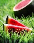 Ripe watermelon on green grass — Stock Photo