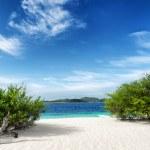 Green tree on white sand beach — Stock Photo #20141685