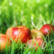 Red apples on green grass - Stock Photo