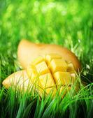 Yellow mango on green grass — Stock Photo