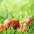 Red apples on green grass — Stock Photo #21068607