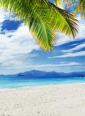 árbol verde en la playa de arena blanca — Foto de Stock