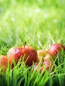 在绿色草地上的红苹果. — 图库照片