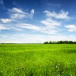 Green field under the blue sky. Summer landscape. — Stock Photo