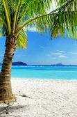 Green tree on white sand beach — Fotografia Stock