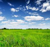 Gröna fältet under den blå himlen. sommar landskap. — Stockfoto
