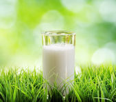 Glass of milk on nature background — Stockfoto